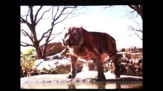 """Toon Age"" Part 5 - Felines on the Prowl"
