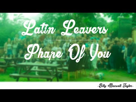 Latin Leavers 2017 ~ Shape of You
