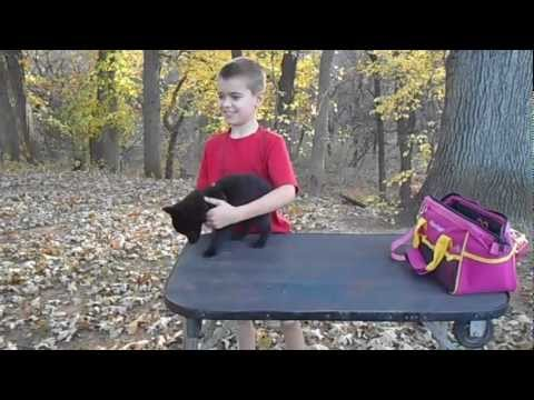 Table Training with Schipperke, Lil' Man