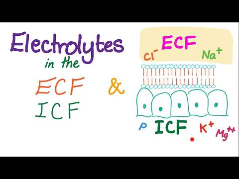 Electrolytes In The ECF And ICF