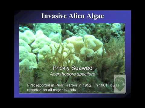 The Decline of Maui's Coral Reefs & Rise of Invasive Algae (Russel Sparks)