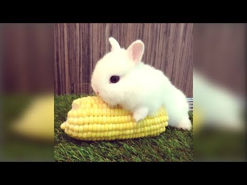 Cute Rabbit - Funny And Cute Bunny Videos Compilation Of Rabbits -- NEW