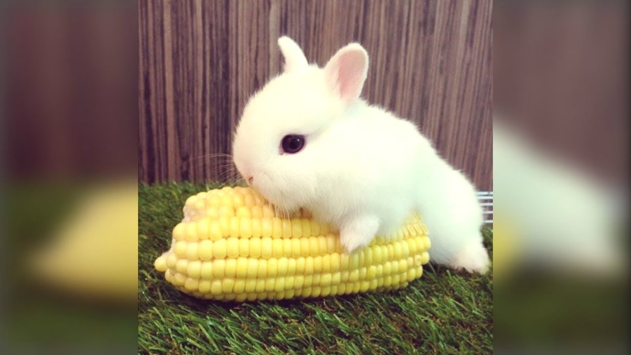 Cute Rabbit Funny And Cute Bunny Videos Compilation Of Rabbits New Youtube