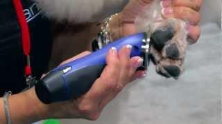 Diane Betelak on Grooming Poodle Feet