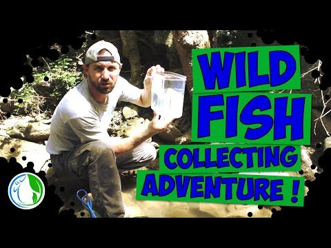 WILD FISH COLLECTING ADVENTURE! US VIRGIN ISLANDS
