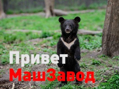 #КРАТКО Медведь на МашЗаводе