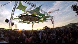 Sunflower Festival 2015