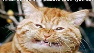 Иващенко Как быстро привыкает кот к уюту