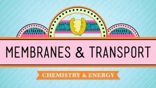 Crash Course: Biology: Membranes & Transport thumbnail