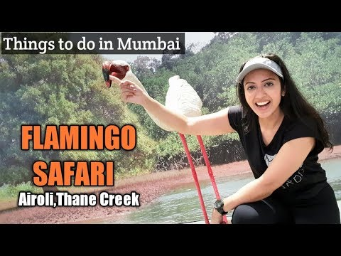 Visit to the FLAMINGO Sanctuary in Airoli | Must Do in Mumba