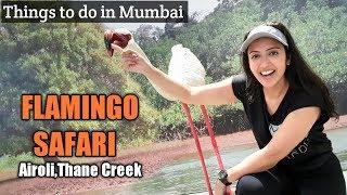Visit to the FLAMINGO Sanctuary in Airoli   Must Do in Mumbai