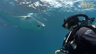 Manta Ray Feeding Frenzy | JONATHAN BIRD