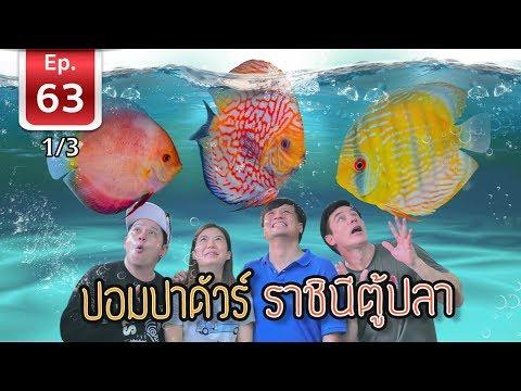 ปอมปาดัวร์ (Discus) ราชินีตู้ปลา  เพื่อนรักสัตว์เอ้ย EP 63 [1/3]