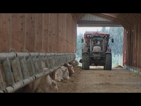 Factory farming on the rise in France