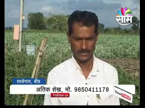 Agrowon | Man leaves driving occupation to become a progressive farmer