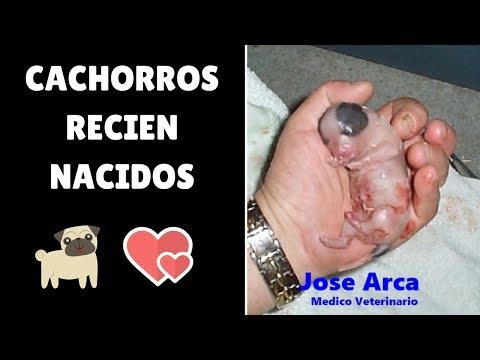 Cachorros Recien Nacidos Su período más crítico - YouTube