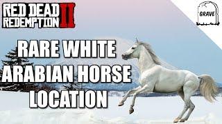 Rare White Arabian Horse Location Red Dead Redemption 2