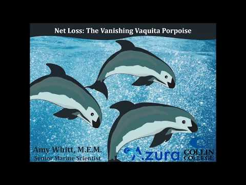 Net Loss: The Vanishing Vaquita Porpoise