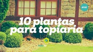10 plantas para topiaria 119