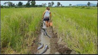 スマートな女の子によるすばらしい釣り - カンボジアでの釣り方 - カンボジアの伝統的な釣りの部分149 thumbnail