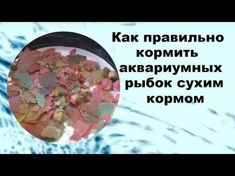 Как правильно кормить аквариумных рыбок сухим кормом.