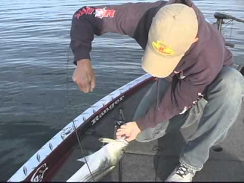 Bass Fishing Lake Amistad Tx Youtube