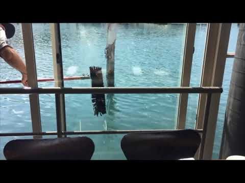 Water Fed Window Cleaning System at Theatre Northern Beaches Sydney