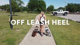 6 Month Old Border Collies | Best Border Collie Training | Off Leash K9 | Board & Train | Oklahoma