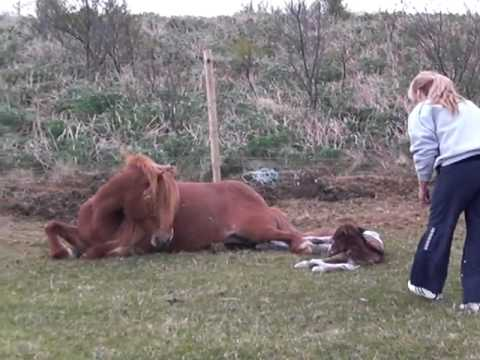 Horse giving birth - YouTube