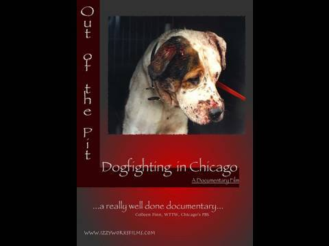 Out of the Pit: Dog Fighting in Chicago