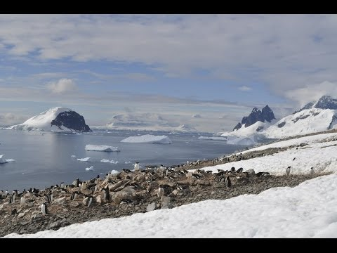 Antarctica: the frozen kingdom (Antarctic Wildlife Documenta