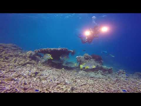 Selayar Marine Dive