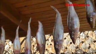 видео купить вяленую рыбу