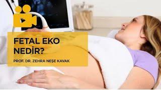 Fetal Eko Nedir? - Prof. Dr. Zehra Neşe Kavak