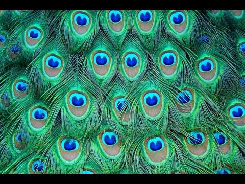 ¿Qué significa soñar con plumas? - Sueño Significado