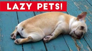 Laziest Pets | Cute and Funny Animals Compilation of 2017 | Funny Pet Videos