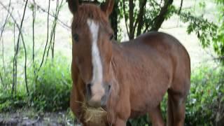 Tag : Je trie mes affaires d'équitation