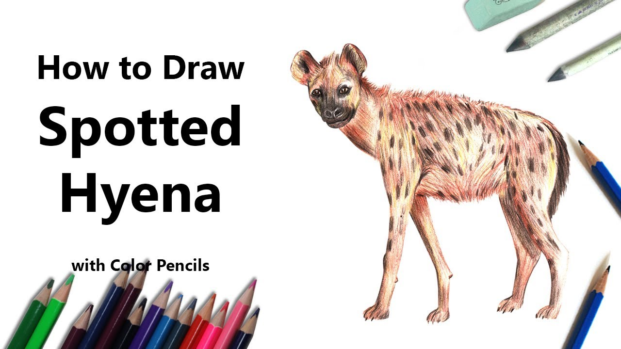 how to draw a spotted hyena with color pencils time lapse