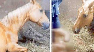 Когда работники фермы увидели, что родила лошадь, то просто не поверили своим глазам