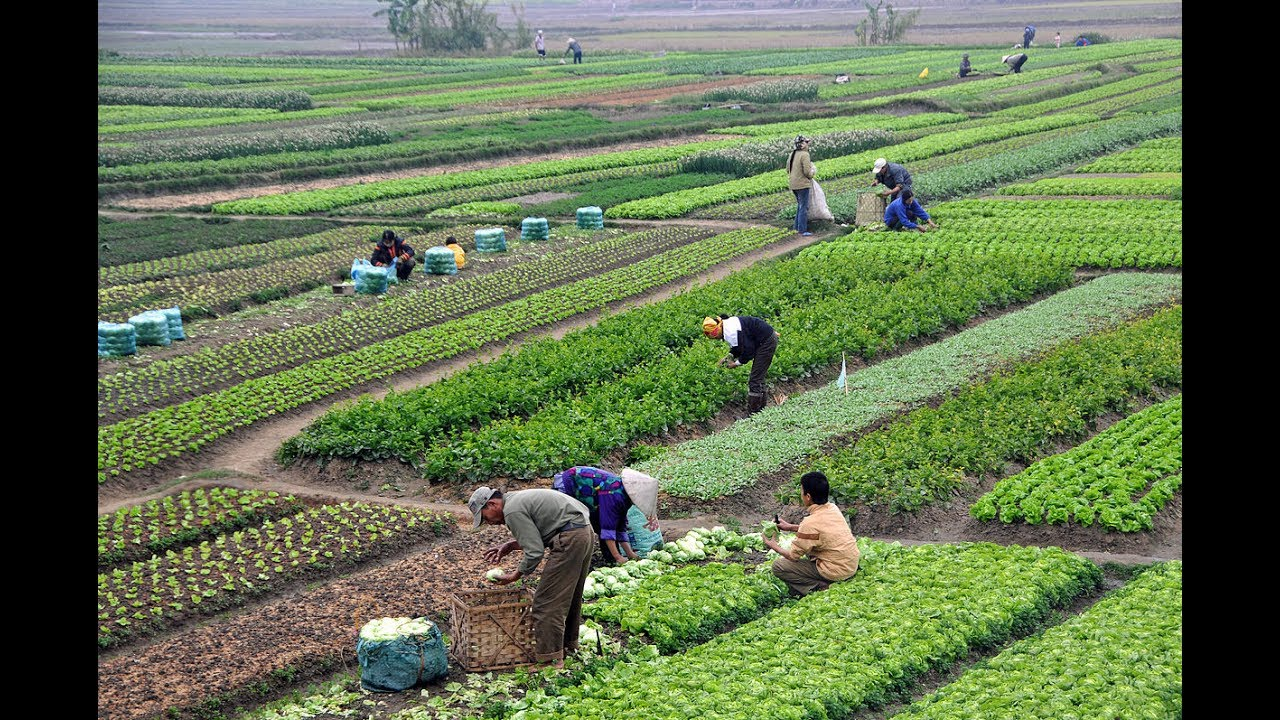 agriculture in bangladesh Rice, river and canal the three faces of barisal is a well-known proverb barisal  was very much known as the granary of bangladesh but with.
