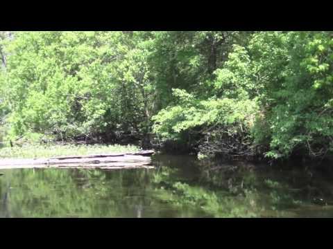 Best Louisiana Swamp Tour Ever!