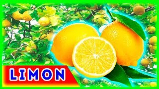 Limon yetishtirish