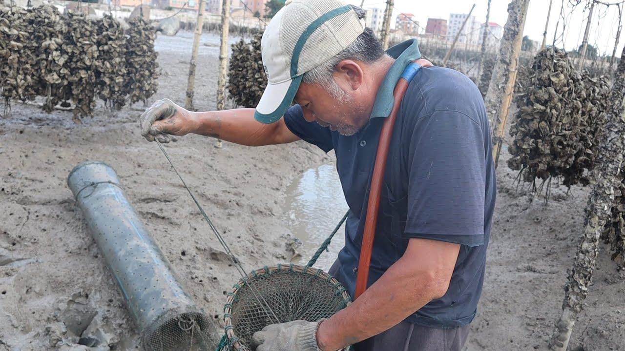泰叔抓到几个月没见的海货,只能用手捧住才能抓,听说内陆卖很贵