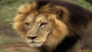 Топ 5 крутых боев животных
