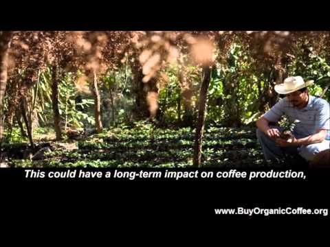 How Does the Strong Dollar Affect Coffee Growers?