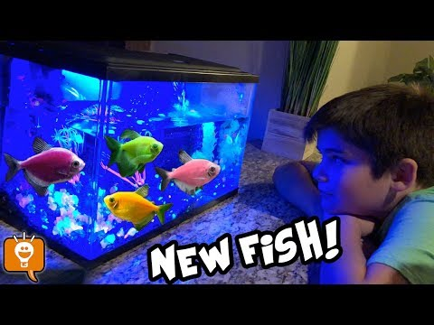 We Get NEW GLOW FISH! Glow In The Dark Pets For HobbyFamilyTV