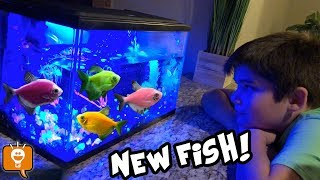 One of HobbyFamilyTV's most recent videos: