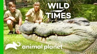 Our Old Friend the Crocodile | Wild Times