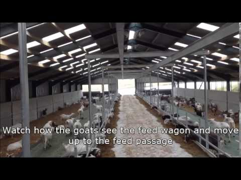 Automatic feeding - A goats eye view