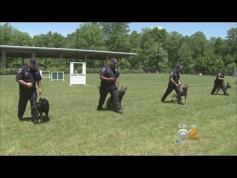 inside-the-mta's-k9-training